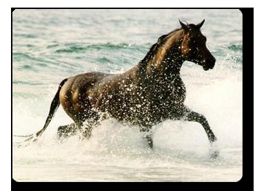 caballo en el mar