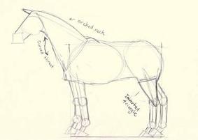 dibujo caballo - paso 3