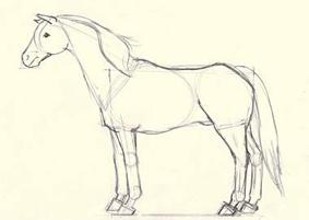 dibujo caballo - paso 4
